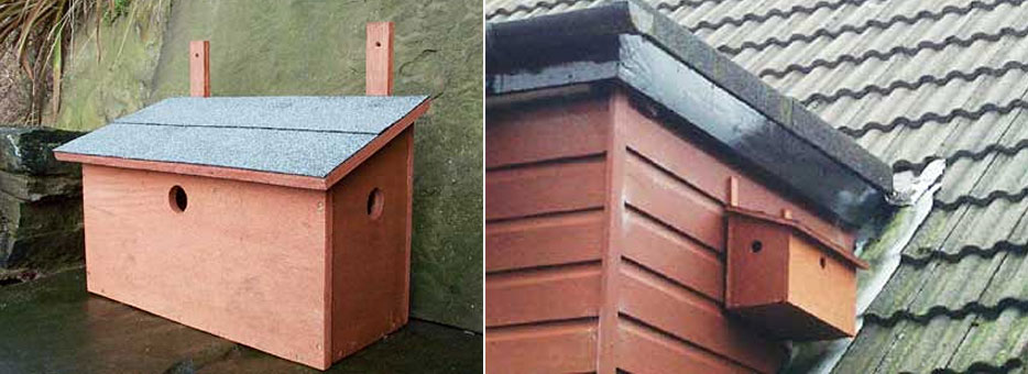 Sparrow Bird Box Free DIY Plans