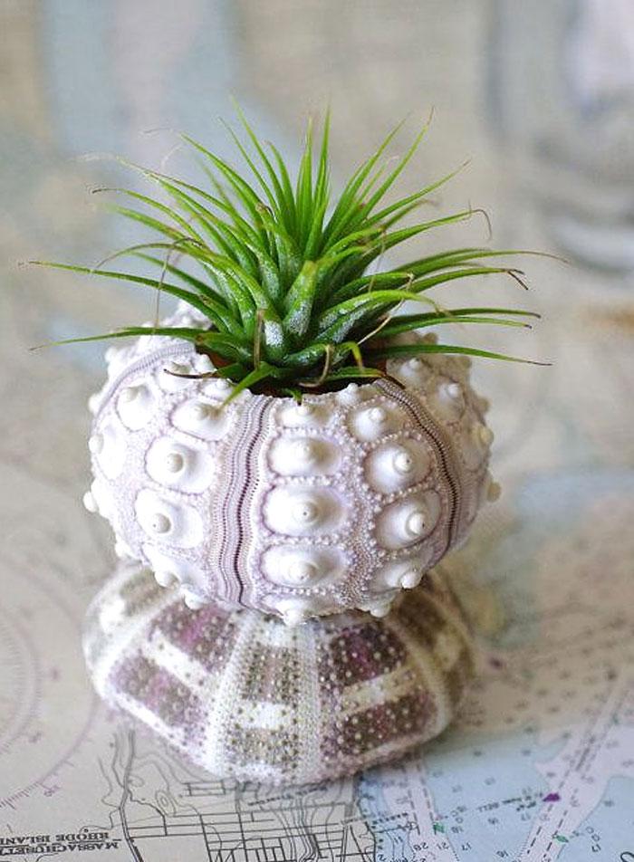 Shell Succulent Planter