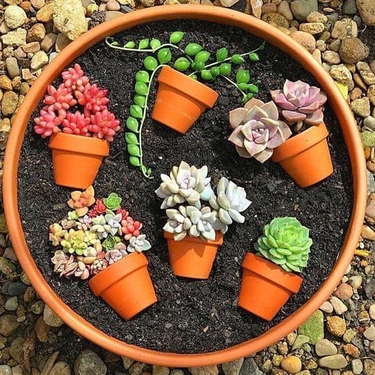 Terra Cotta Succulent Garden Art Pot Ideas